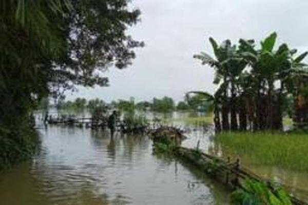 Sawah di Simbang Maros terendam banjir